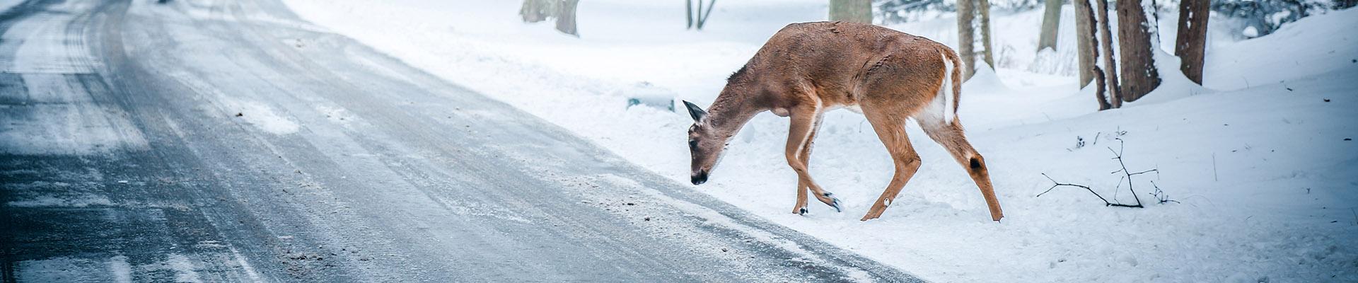 Sneeuwkettingen voor de Toyota RAV4